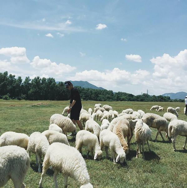 đồng cừu vũng tàu