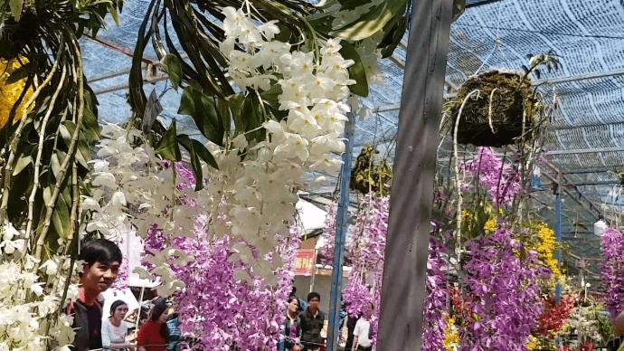 Festival bien vung tau