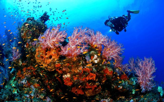 Để có được chuyến đi thú vị, hãy lặn biển ngắm san hô Côn Đảo