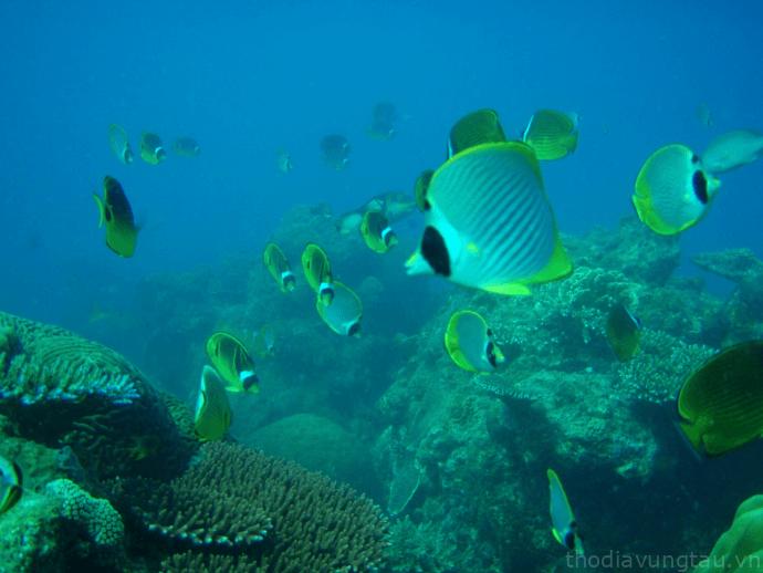 Sinh vật dưới biển đa dạng