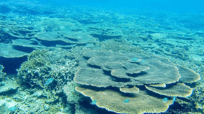 Vẻ đẹp của san hô tại Hòn Tài