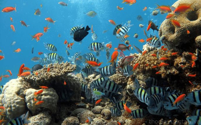 cảnh quan xinh đẹp dưới biển