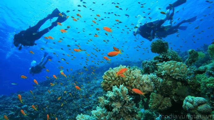 thế giới tuyệt vời dưới đại dương