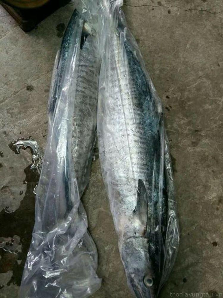 cá thu tươi tại hải sản khô 3 sạch vũng tàu