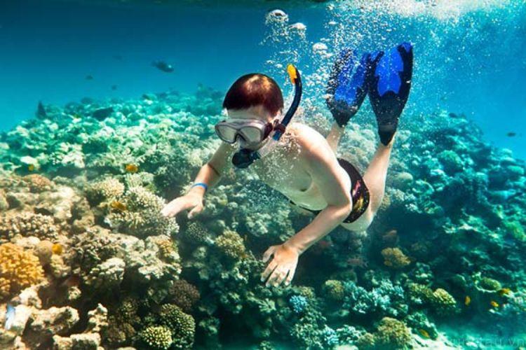 Lặn ngắm san hô tại côn đảo